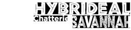 Chatterie Hybrideal Savannah